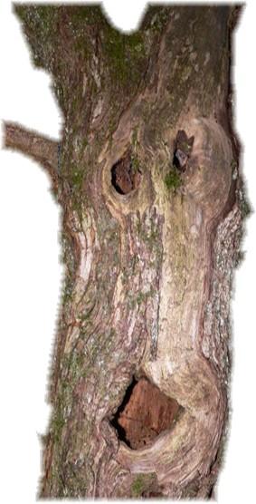 arbredroit.png