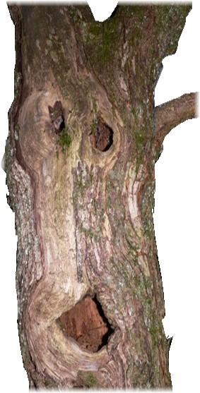 arbrez.png
